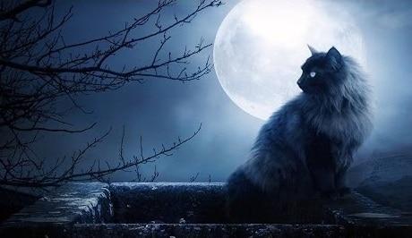 Миф о черной кошке как пособнице ведьм
