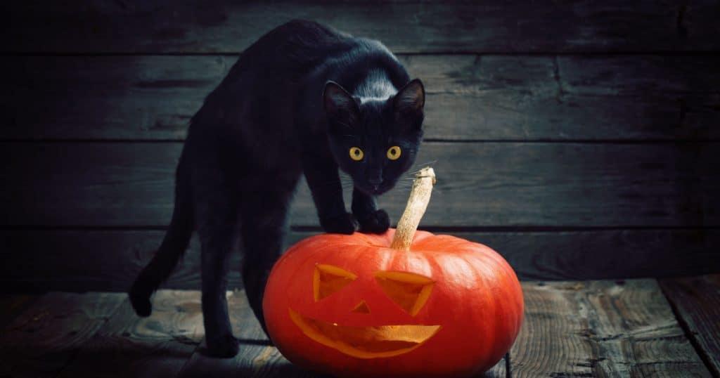 Что нельзя делать в Хэллоуин