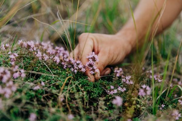 собирать травы